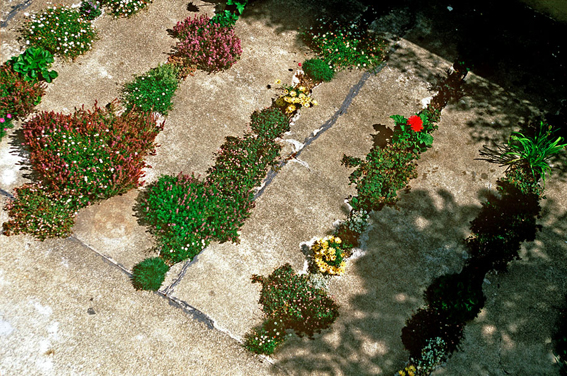 Crack-Garden-a-San-Francisco-di-GM-Landscape-Architecture