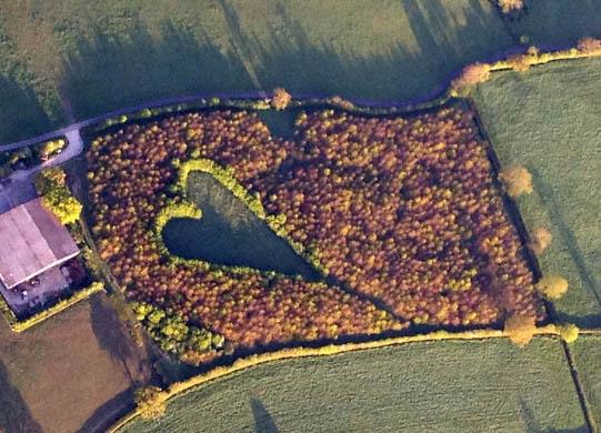 bosco-a-forma-di-cuore