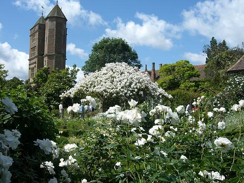un-giardino-bianco-per-torta-e-il-white-garden-di-vita