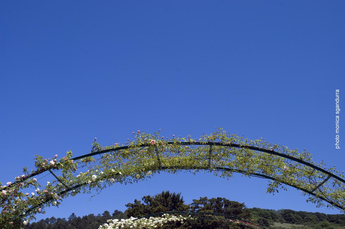 giardino di Giverny