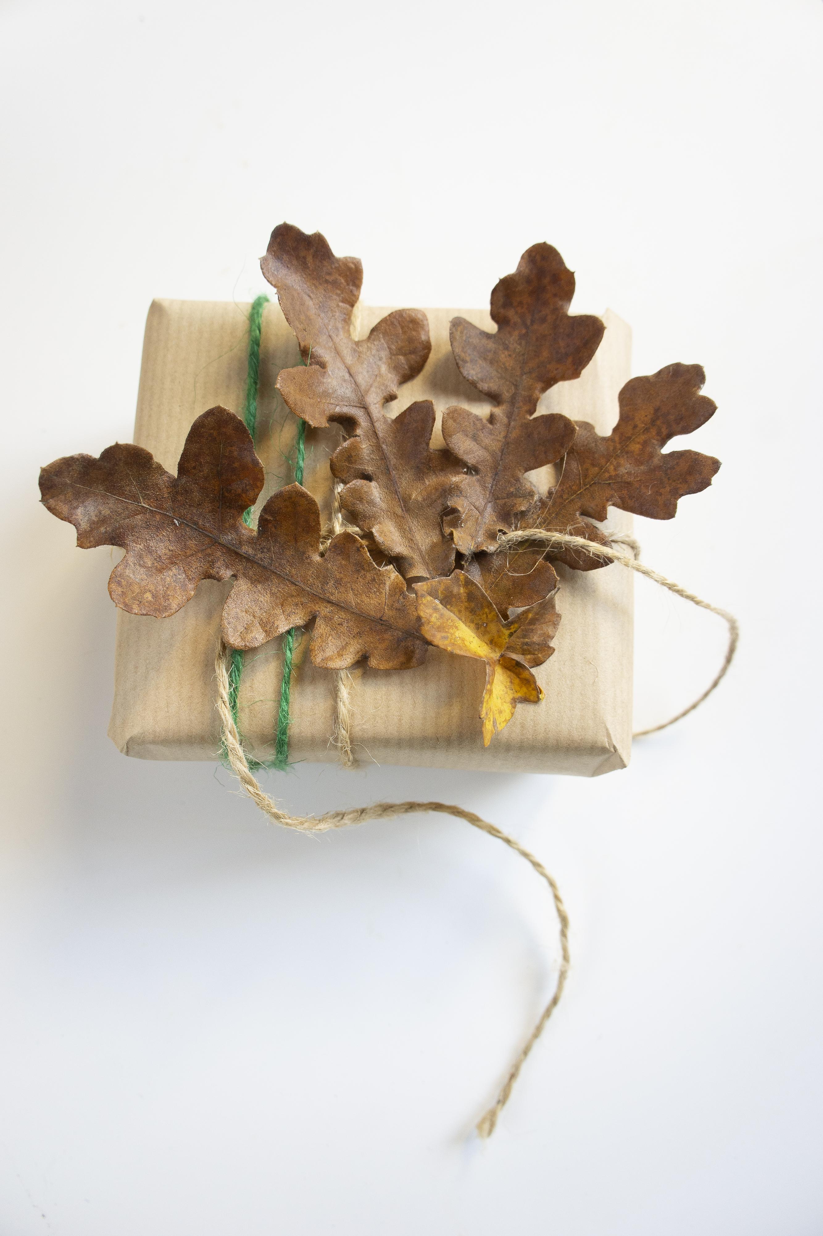 pacchetto-quercia